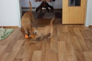 Mamma ville också vara med! Äitikin halusi leikkiä!
