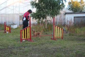 Hundar agility när-bok 100