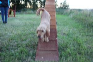 Hundar agility när-bok 105