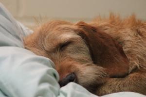 My värmer sängen Nuusku lämmittää sängyn
