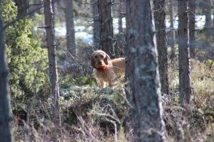 solig skogsdag 045